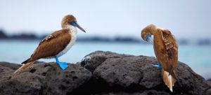 1400-1400_Galapagos-Islands-MAIN